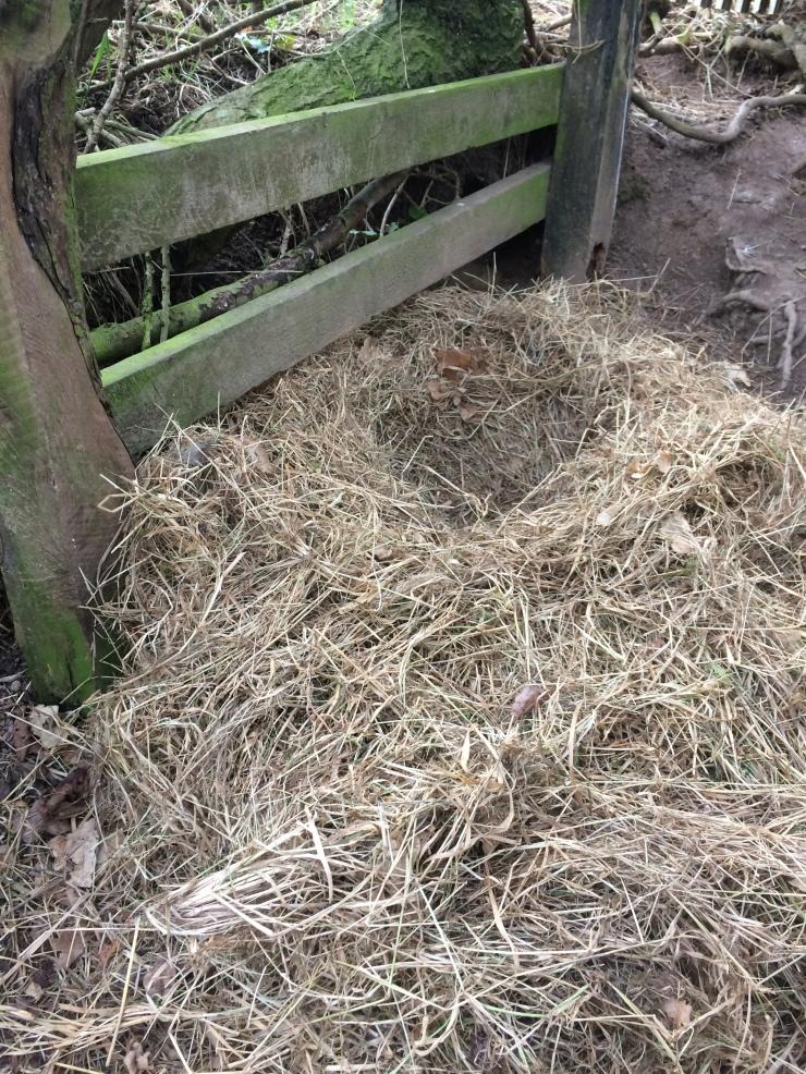 AG nest